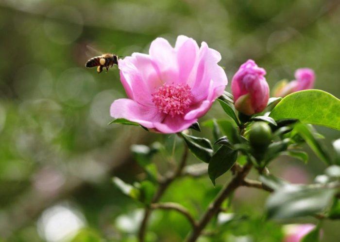 Rosa de Bayahíbe 1